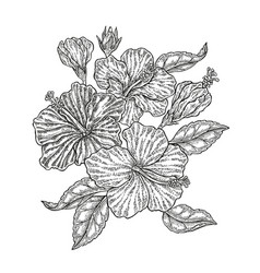 Hand drawn tropical flowers vintage floral vector
