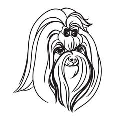 image maltese dog on white background vector image