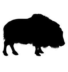 Silhouette bison on a white background vector