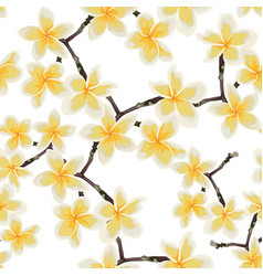 tropical seamless pattern with white plumeria vector image