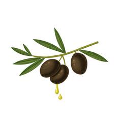 vintage black olives and oil drops vector image