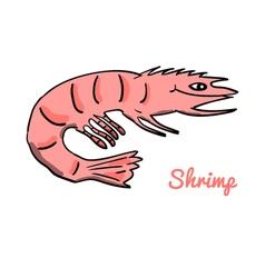 Cute cartoon shrimp vector image