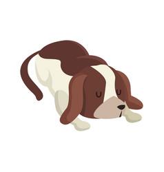 dog pet animal sleeping image vector image