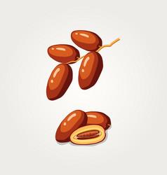 Dates fruits food for iftar in ramadan flat illus vector