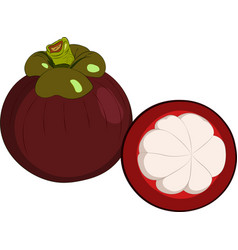 mangosteen isolated on white background vector image