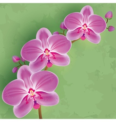 Floral vintage background green with flower orchid vector image