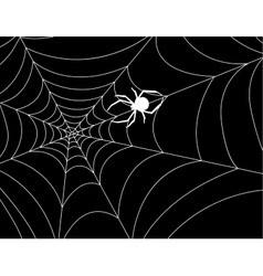 cobweb with a spider in center against night vector image