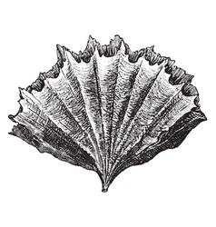 Stony coral vintage vector