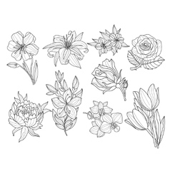 Flower Set Hand Drawn vector image