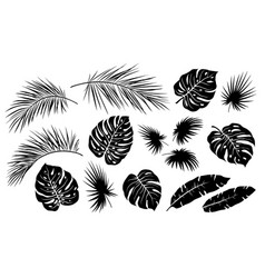black tropical jungle isolated palm leaves set vector image