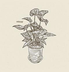 Laceleaf hand draw sketch vector