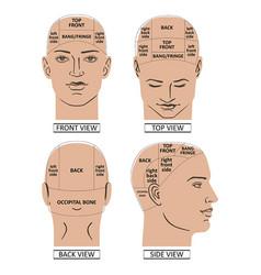 Man head divisions scheme vector