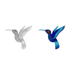 small hummingbird exotic tropical colibri animal vector image