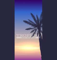 Summer tropical background palm tree on sunset vector