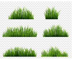 Green grass borders transparent background vector