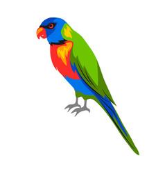 rainbow lorikeet tropical exotic vector image