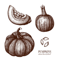 Pumpkin hand drawn set thanksgiving design elemen vector