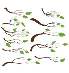 Tree branch and leaves set vector image