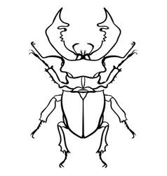 beetle deer horned beetle big insect line art vector image
