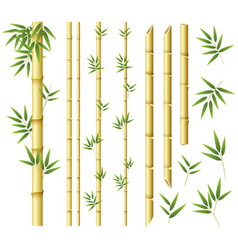 bamboo stems and leaves on white background vector image