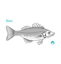 bass hand-drawn vector image