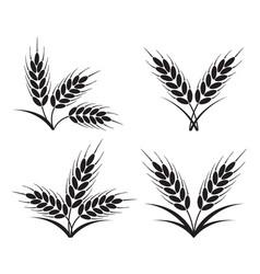 bunches wheat barley or rye ears vector image