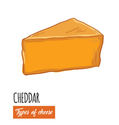 Hand drawn colorful cheddar cheese vector