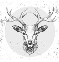 Hipster animal deer hand drawing muzzle vector