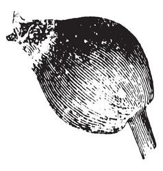 Infested apple bud vintage vector