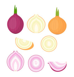 Set with different onions vector
