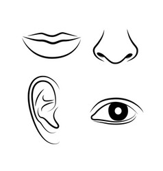 hand drawn human senses icons vector image