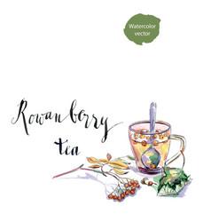 cup of rowanberry tea vector image vector image