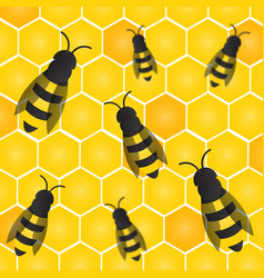 Bees wasps and honeycombs with honey vector