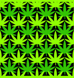 cannabis leaves on green background vector image