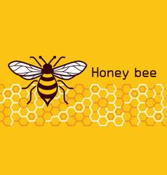 Honey bee image vector