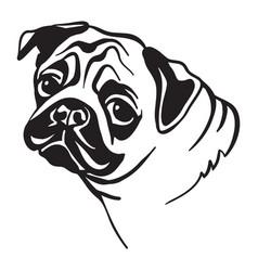 image pug dog on white background vector image