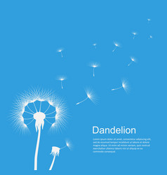 dandelion on blue template poster vector image