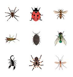 Realistic dor wasp tarantula and other vector
