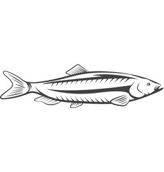 herring fish design isolated on a white background vector image