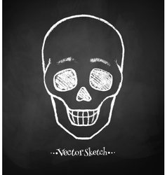Chalkboard drawing of skull vector image
