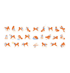 collection akita inu performing daily vector image