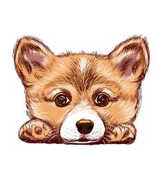 corgi puppy dog sticker on wall sketch draw vector image