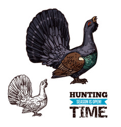 Grouse bird sketch hunting sport vector