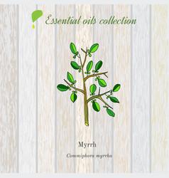 myrrh essential oil label aromatic plant vector image