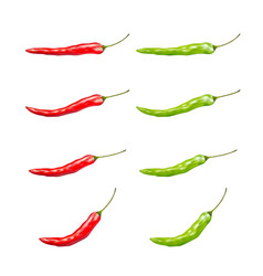 set red and green chilli on a white background vector image