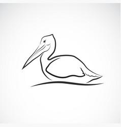 spot-billed pelican bird pelecanus philippensis vector image