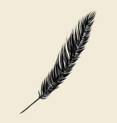 brush sketch of a feather vector image