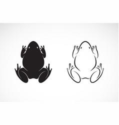 frogs design on white background amphibian animal vector image