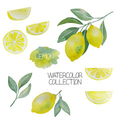 lemon watercolor collection vector image