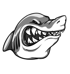 Shark mascot team label design vector image